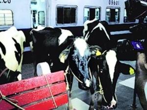 गौरक्षकों ने रेल रोक उतरवाई गाय, रेलवे के कर्मचारियों और लोगों को पीटा