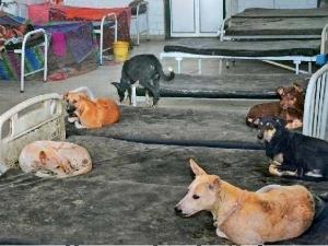 बिहार: सरकारी अस्पताल में 'आतंकवादी' कुत्तों का बेड पर कब्जा, डर कर रहते हैं मरीज