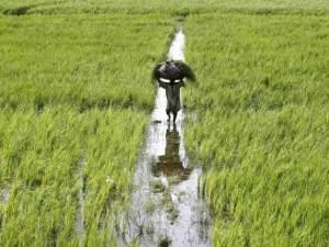 असम में सरकार ने किसानों को दी बड़ी राहत, 25 फीसदी कर्ज माफ