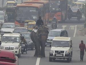 News in Pics: घने कोहरे ने हाथी को भी सड़क पर ला दिया