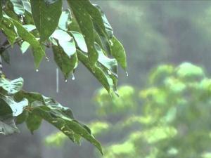 कहीं तो होगी जमकर बारिश तो कहीं पर 1 बूंद के लिए तरसेंगे लोग