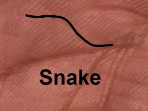 क्या हो अगर आपकी हथेली में सांप का चिन्ह बना हो...?