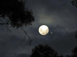 Lunar Eclipse 2019: साल 2019 में आएंगे दो चंद्रग्रहण