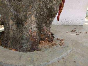 टूटी मिली भगवान हनुमान की मूर्ति, गांव में तनाव का माहौल