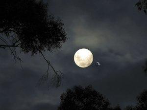 चंद्रग्रहण के दौरान क्यों भोजन नहीं किया जाता?