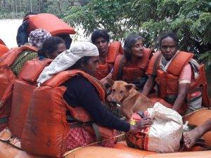 बाढ़ में डूबा घर,फिर भी महिला ने कुत्तों को नहीं छोड़ा अकेले