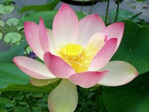 जानिए कौन सा फूल चढ़ाने से भगवान होते हैं प्रसन्न?