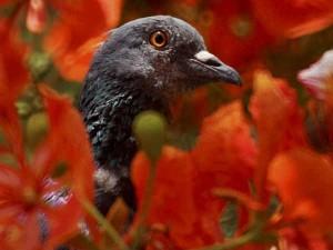 पशु-पक्षी भी करते हैं बारिश के बारे में भविष्यवाणी, जानिए कैसे?