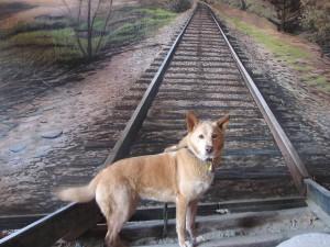कुत्ते के टहलने के चलते रोक दी गई मुंबई लोकल ट्रेन