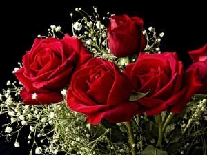 Happy Rose Day: गुलाब के रंगों में छिपी है गहरी बातें, जानें कौन सा रंग है किसके लिए