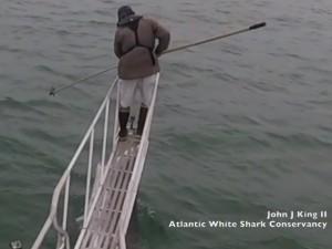 VIDEO: पानी में से अचानक निकली शार्क और व्यक्ति के पैर पर किया हमला, लाखों लोगों ने देखा वीडियो