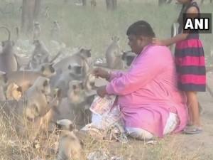 बंदरों से इस शख्स को है ऐसा लगाव, अपने हाथों से खिलाता है 1700 रोटियां