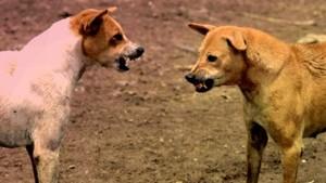 आवारा कुत्तों का आतंक, तीन महीने के मासूम को मार डाला