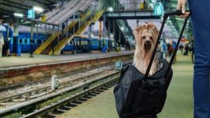 डॉग लवर्स के लिए अच्छी खबर: फर्स्ट AC में अपने साथ ले जा सकेंगे Pet, बदल गए नियम