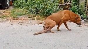 लोगों को आकर्षित करने के लिए ये कुत्ता करता है चौंकाने वाली एक्टिंग, देखिए ये वायरल VIDEO