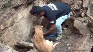 कुत्ते की चालाकी से बची उसके दो बच्चों की जान, इंटरनेट पर सेंसेशन बन गया है यह वायरल VIDEO