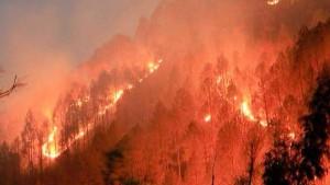 Fact Check: क्या है उत्तराखंड के जंगलों में लगी भीषण आग की सच्चाई?