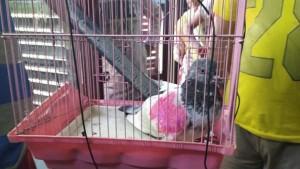 भारत में पकड़े गए 'जासूस' कबूतर के पाकिस्तानी मालिक ने पीएम मोदी से मांगी मदद
