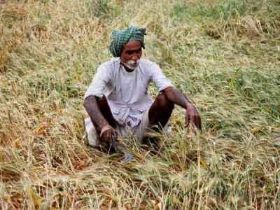 मध्य प्रदेश के किसानों को नए साल में मिल सकता है कर्जमाफी का तोहफा, बनाया गया रोडमैप