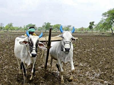 तीन दिन में 70 किमी पैदल चला किसान, बैंक से निकाल पाया 2000 रुपये