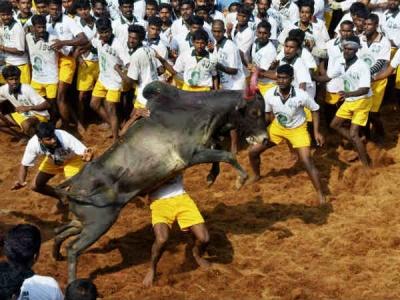 Tamilnadu: जल्लीकट्टू में 2 लोगों की गई जान, 30 लोग घायल
