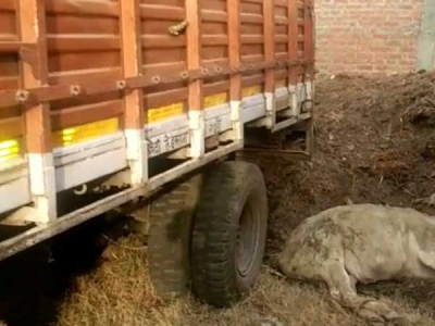 गौ तस्करों ने टैंकर से की पुलिसकर्मियों को कुचलने की कोशिश