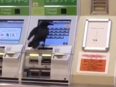 VIDEO: कौए ने क्रेडिट कार्ड से की ट्रेन टिकट खरीदने की कोशिश