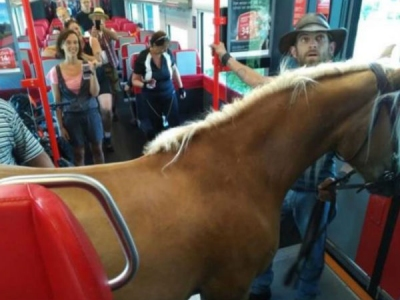 घोड़ा लेकर ट्रेन में चढ़ गया शख्स, देखते रह गए यात्री
