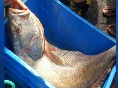 मछली ने बदल दी दो भाइयों की किस्मत,मिनटों में बन गए लखपति