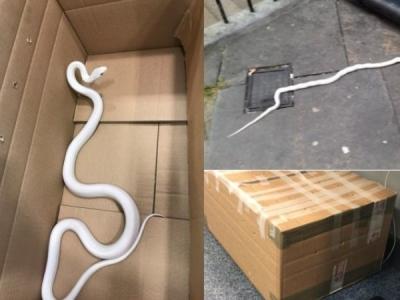 पुलिस को मिला संदिग्ध बॉक्स, खोलकर देखा तो था सफेद सांप