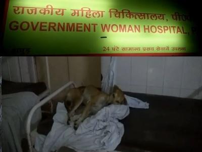 हापुड़ महिला अस्पताल में बेडों पर आराम फरमा रहे हैं कुत्ते