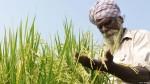 ब्लॉग: किसानों के फफोलों से शमी के घर की कलह ज़्यादा अहम क्यों?