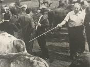 ब्राज़ील की गायों की रगों में दौड़ता है इस गुजराती साँड़ का ख़ून