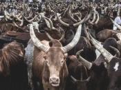 नाइजीरिया: डकैतों को यहां एक AK-47 के बदले मिलेंगी दो गायें