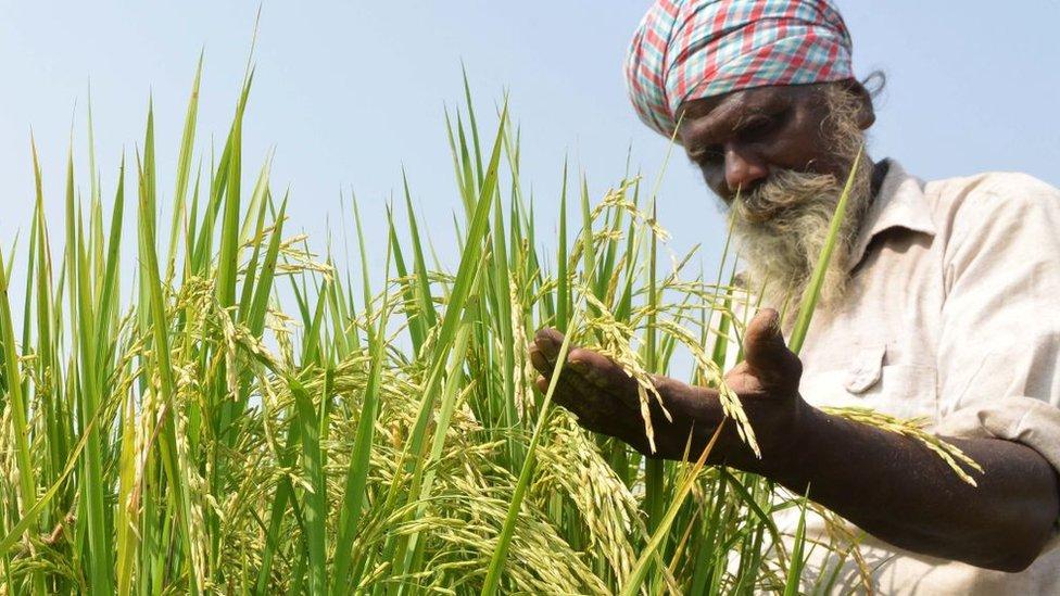 नज़रिया: समाधान की घोषणा के बाद भी क्यों ठगा जाता है किसान?
